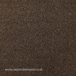 Valencia 996 Chocolate Stain Defender Polypropylene Carpet